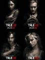 True Blood Seasons 1-4 DVD Boxset