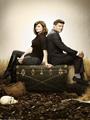 Bones Season 7 DVD Box Set